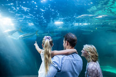 Familly looking at fish tank Stock Photo