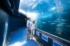 Familly looking at fish tank Stock Photo