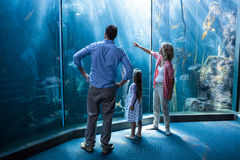 Familly looking at fish tank Royalty Free Stock Image