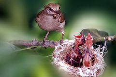 Family. A mother bird is on decision whom to feed first Stock Photos