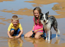 Family. Children and dog playing in the water royalty free stock image