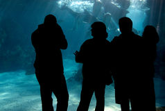 Family activity. A family watching dolphins underwater royalty free stock image