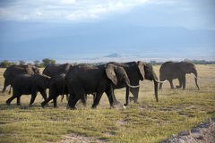 Family of african elephant Stock Photo