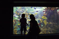 Family in aquarium Stock Photography