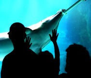 Family in aquarium. With dolphin stock photos