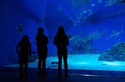 Family in aquarium Royalty Free Stock Photo
