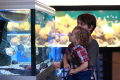 Family at aquarium Stock Image