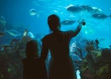 Family in aquarium. Royalty Free Stock Photography