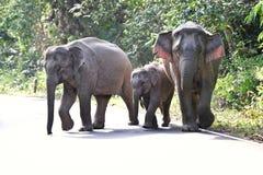 Family of Asian elephant Stock Photo
