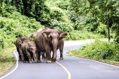 Family of Asian elephant Royalty Free Stock Photos