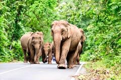 Family of Asian elephants Stock Photos