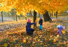 Family in autumn maple park. Happy family (mother with small children) walking in golden maple autumn park Royalty Free Stock Images