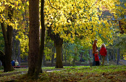 Family in autumn park. Happy family (mother with children) in golden autumn city park Royalty Free Stock Photo