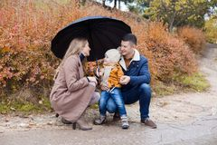 Family autumn in the Park in the rain umbrella stock photo