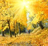 Family in autumn sunshine maple park. Happy family (mother with small children) walking in golden maple sunshine autumn park Stock Image
