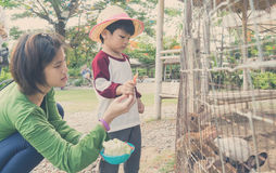 Family with baby boy feeding farm bunny. Stock Photos