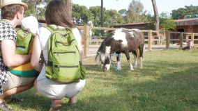 A family with a baby examines a pony near an enclosure. A little horse is very pleased with a little boy.  stock video