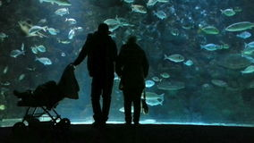 Family with baby in oceanarium, silhouettes stock footage