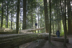 Family balancing on fallen trees Royalty Free Stock Photos