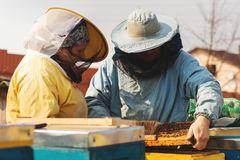 Family beekeepers. Beekeeper Inspecting Bee Hive after winter stock image