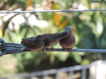 A family of birds kissing stock photos