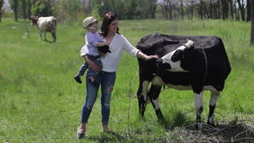 Family and black cows stock footage