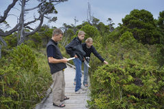 Family on Boardwalk studying Plants in a Bog. Pacific Rim National Park, Vancouver Island, British Columbia, Canada royalty free stock photos