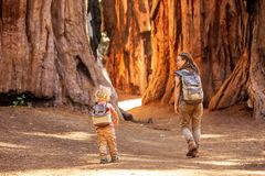 Family with boy visit Sequoia national park in California, USA.  royalty free stock images