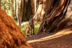Family with boy visit Sequoia national park in California, USA.  stock photo