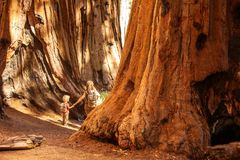 Family with boy visit Sequoia national park in California, USA.  royalty free stock photography