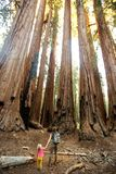 Family with boy visit Sequoia national park in California, USA.  stock image