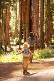 Family with boy visit Sequoia national park in California, USA.  stock images