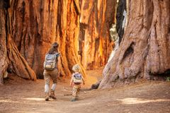Family with boy visit Sequoia national park in California, USA.  stock photos
