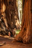 Family with boy visit Sequoia national park in California, USA.  royalty free stock photos