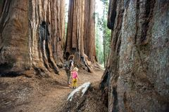 Family with boy visit Sequoia national park in California, USA.  royalty free stock photo
