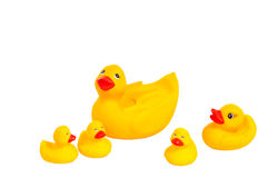 Family of bright yellow rubber bath duck toys Stock Photos