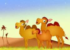 Family camels Royalty Free Stock Photo