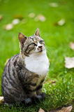Family cat. Waiting to be feed Stock Photography
