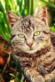 Family cat Royalty Free Stock Images
