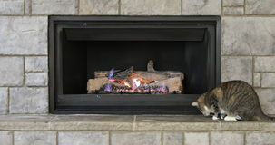 Family cat playing near fireplace stock footage