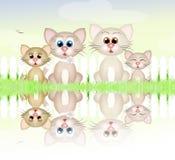 Family of cats Royalty Free Stock Photos
