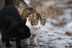 Family cats. A pair of lovers cats on the street. Outdoor cats in winter. Homeless cats. The life of wild cats stock photo
