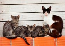Family of cats resting on bricks Royalty Free Stock Photo