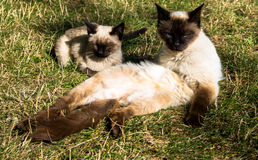 Family cats resting grass  Sunny day. Family cats resting on the grass on a Sunny day Stock Photo