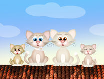 Family of cats on roof Stock Images
