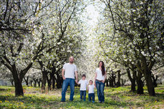 Family in cherry blossom garden Stock Photos