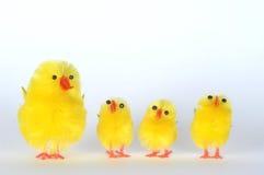 Family of Chicks. Family of four artificial chicks Stock Photos