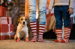 Family child legs and dog in striped red and white socks under t royalty free stock photography