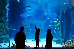 Family with child visitors large oceanarium Stock Photo