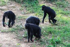 Entebbe zoo along lake Victoria in Uganda stock photography